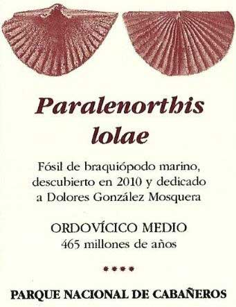 Paralenorthis